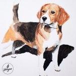 13-Beagle