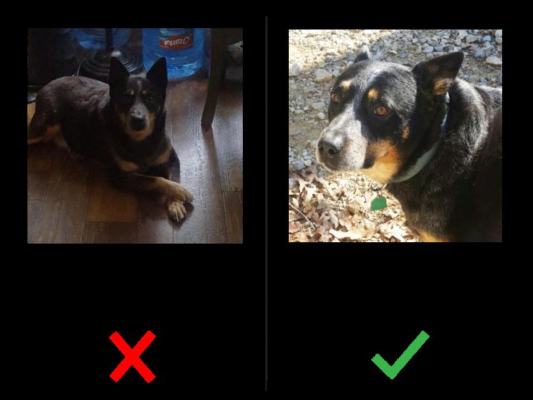 Photo-Examples-Good-v-Bad2